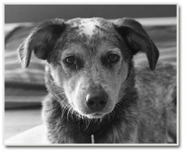 East Mississippi Animal Rescue Meridian Mississippi